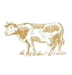 Cow doodle on white vector