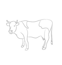 drawing of a cow line vector image