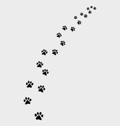 Footprints cat vector