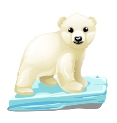 Little polar bear on ice floe animal isolated vector image