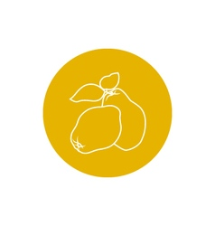 Icon Quince in the Contours vector image