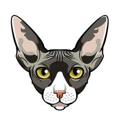 Sphynx cat face cartoon vector
