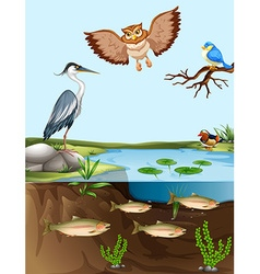 Birds and fish by the pond vector