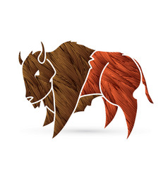 buffalo bison graphic vector image