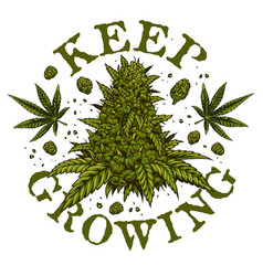 Cannabis emblem vector
