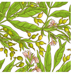 cardamom pattern vector image