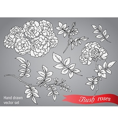 Collection of hand drawn bush roses vector