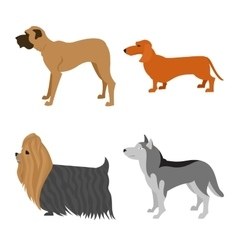 Dogs flat set vector image