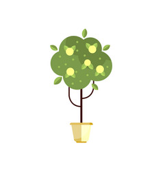 Tree in pot with green foliage and fruits indoor vector