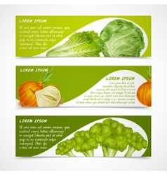 Vegetables banners horizontal vector image vector image