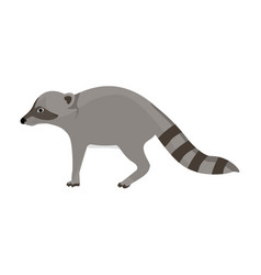 animal zoo raccoon vector image
