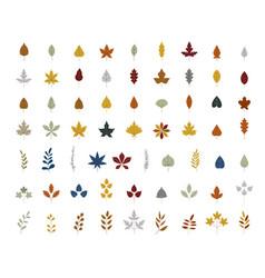 autumn leaves maple oak birch isolated on vector image