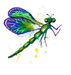 Green Watercolor Dragonfly vector image