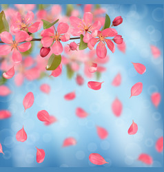 Pink blossoming cherry and falling petals vector