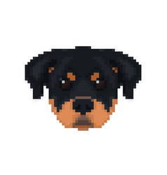 rottweiler head in pixel art style dog vector image