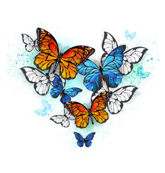 Morpho and monarchs vector