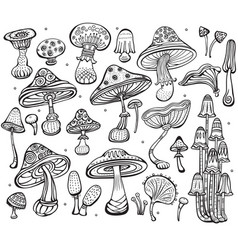 set of sketch of mushrooms vector image