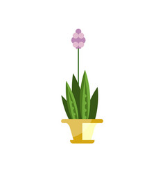 flowering house plant indoor flower in pot vector image vector image