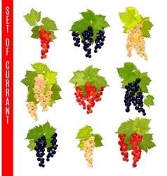 Set of doodle berries Currant vector image vector image