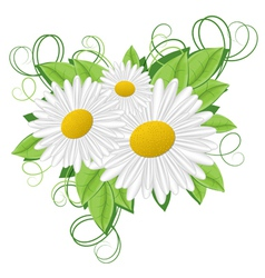 flower camomile vector image vector image