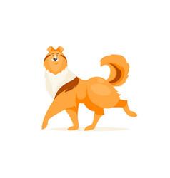 Collie dog vector