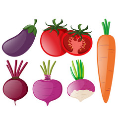 different types of colorful vegetables vector image
