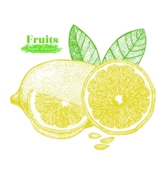 Fruit Lemon with Leaf and Slice Hand Draw Sketch vector image