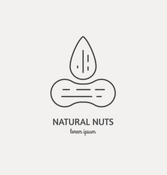 line icon of nuts vector image