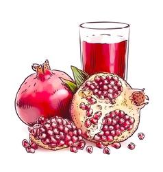 Pomegranate Watercolor imitation vector