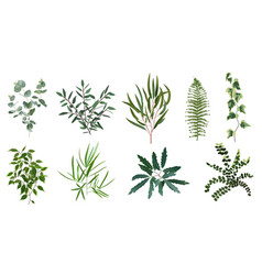 realistic green herb plants nature plant leaves vector image