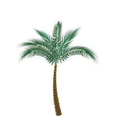 Tropical green palm isolated on white background vector