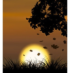 Autumn sunset background with falling maple leaves vector image