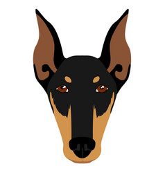 doberman pinscher avatar vector image