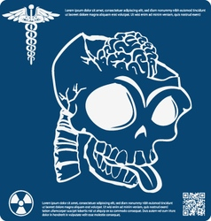 Skull X ray 6 vector