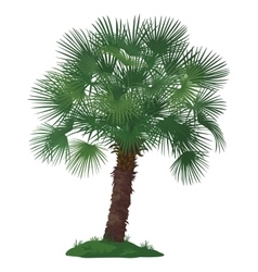 Palm Tree and Green Grass vector image vector image