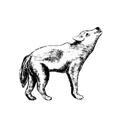 wolf icon grunge style vector image vector image