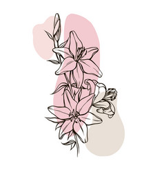 beautiful bouquet lily vector image