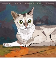 Burmilla Cat vector