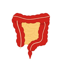 human digestive system digestive tract isolated vector image