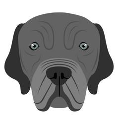 neapolitan mastiff avatar vector image