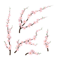realistic 3d detailed blooming cherry blossom vector image