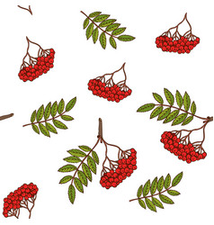 seamless pattern with rowan branches vector image