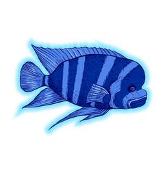 Bright tropical sea fish vector
