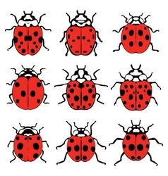 cheerful ladybugs vector image