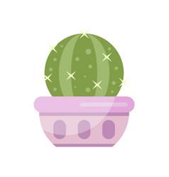 cactus house plant indoor flower in pot elegant vector image vector image