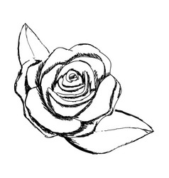 monochrome sketch of rose flower with leaves vector image vector image