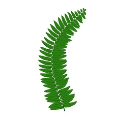 fern leaves isolated on white background vector image