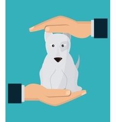 Pet shop and dog design vector image