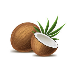 realistic 3d detailed whole coconut half and vector image