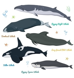 Set of Whales from the world Killer Whale Pygmy vector image